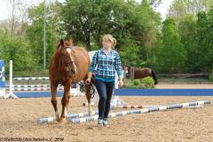 01.05.2014: Schulpferde